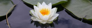 the lotus represents our enlightened state